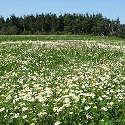 Land Rohan - Prairie